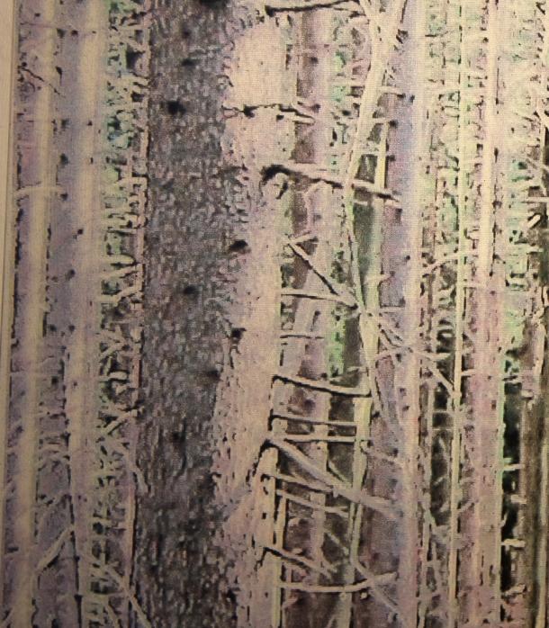 40×40, Ausstellung im Maluramuseum Oberdießen mit der Künstlergruppe Foehn eV